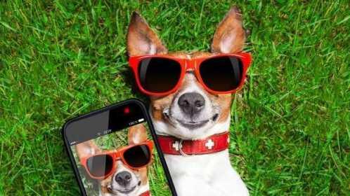 comerciales-divertidos-de-perros--624x351