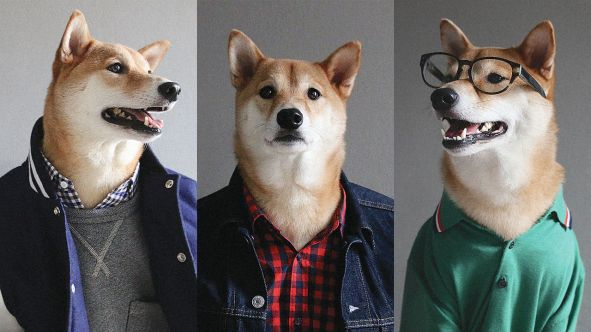 3045572-poster-p-1-menswear-dog-shell